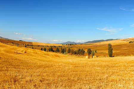 Landscape with Many Hay Bales  photo