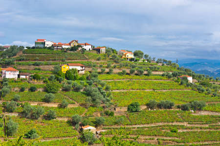 Vineyards on the Hills of Portugal photo