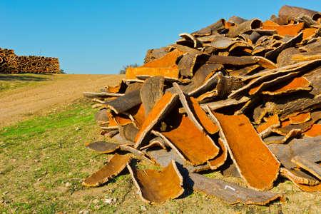 corkwood: El secado del bosque de tap�n para la elaboraci�n del vino Corchos en Portugal