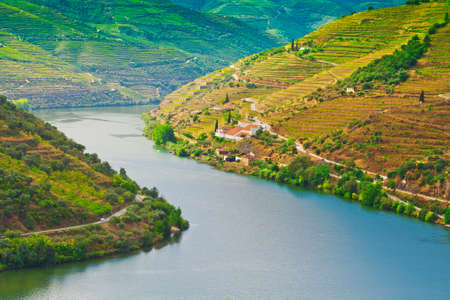 portugal agriculture: Vineyards in the Valley of the River Douro, Portugal