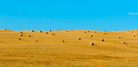 bail: Tuscany Landscape with Many Hay Bales