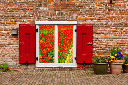 Surreal View of Dutch Tulips through the Window photo
