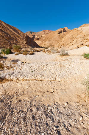 nature reserves of israel: Dry Riverbed in the Negev Desert