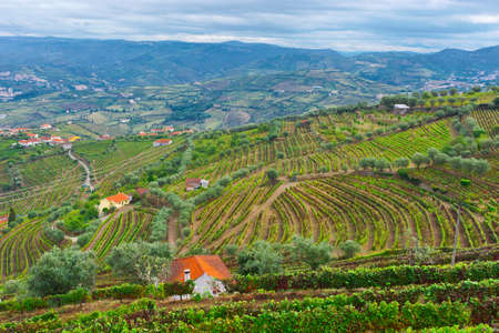Extensive Vineyards on the Hills of Portugal photo