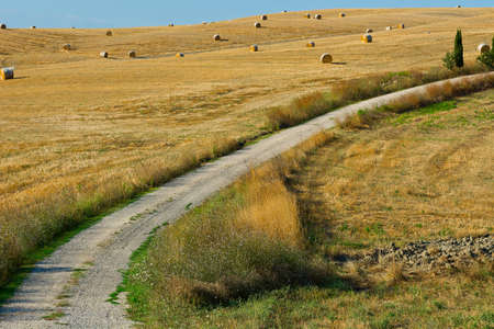 Dirt Road Leading to the Farmhouse in Tuscany, Italy photo