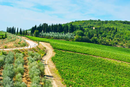 Tuscan Landscape with Vineyards and Olive Groves photo