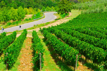Winding Paved Road between Vineyards in the Tuscany photo