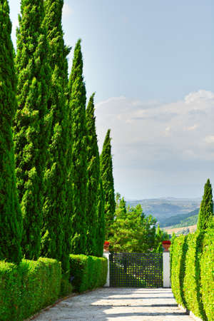 Cypress Alley Leading to the Farmhouse in Tuscany photo