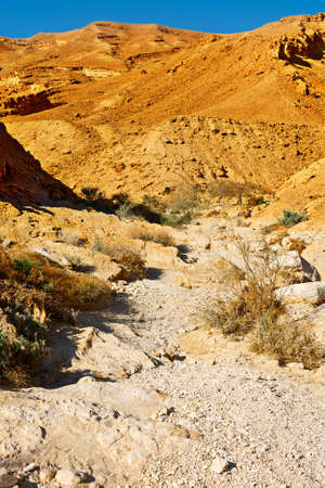 riverbed: Dry Riverbed in the Negev Desert