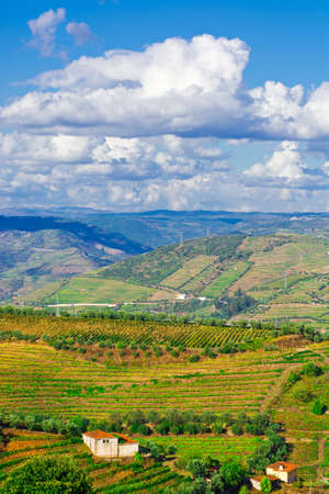 extensive: Extensive Vineyards on the Hills of Portugal
