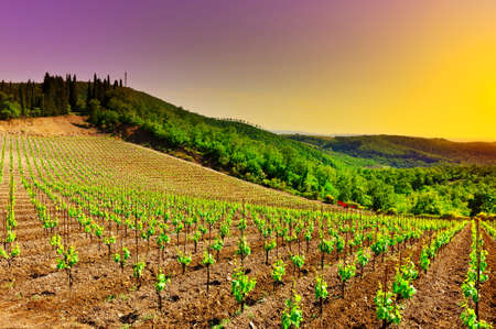 Hill of Tuscany with Vineyard at Sunset photo