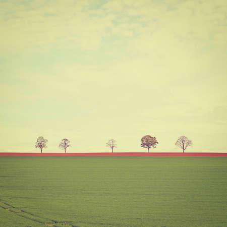 比利时的绿色牧场地