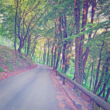 Asphalt  Road in the Forest photo