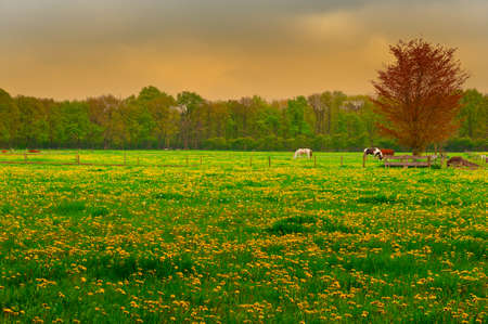 floodplain: Cows and Horses  Grazing in the Floodplain of  Netherlands