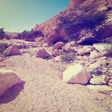 Dry Riverbed in the Judean Desert photo