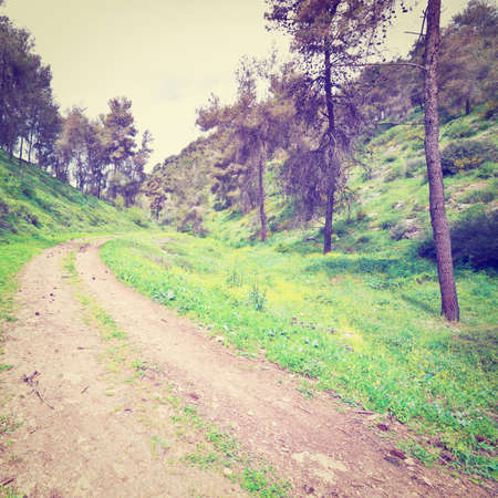 galilee: Dirt Road in the Forest of Galilee
