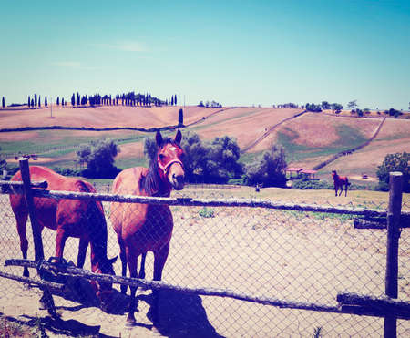 Landscape with Horses in Italy, Retro Effect photo