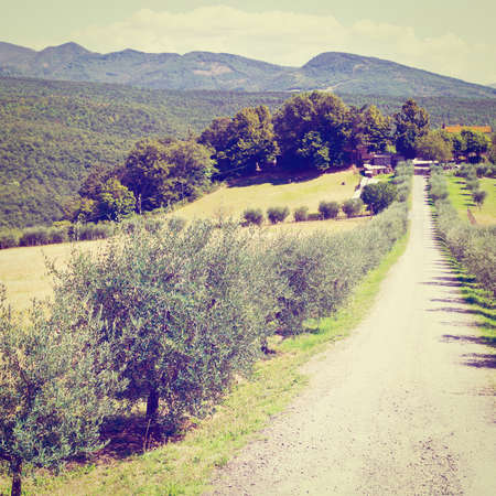 Olive Alley Leading to the Farmhouse in Tuscany, Retro Effect photo