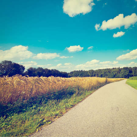 Asphalt Path between Corn and Wheat Fields in Bavaria, Germany photo