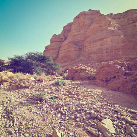 nature reserves of israel: Canyon in the Judean Desert on the West Bank