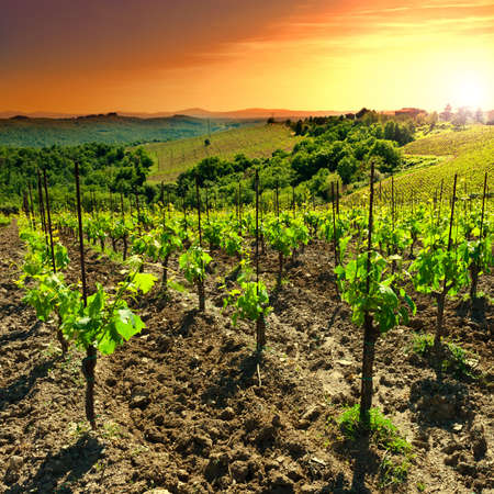 Hill of Tuscany with Vineyard in the Chianti Region, Sunset photo