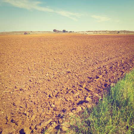 sandy soil: Povero terreno sabbioso, dopo il raccolto in Israele