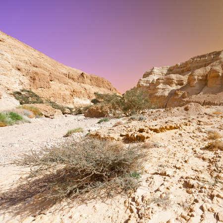 judean: Sunrise in the Judean Desert on the West Bank