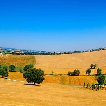 Italian Landscape with Many Hay Bales  photo