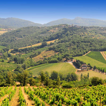Vineyard and Farmhouses at the Foot of the Italian Alps photo