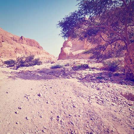 judean: Dry Riverbed in the Judean Desert, Instagram Effect