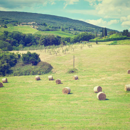 Landscape with Many Hay Bales and Vineyard. photo