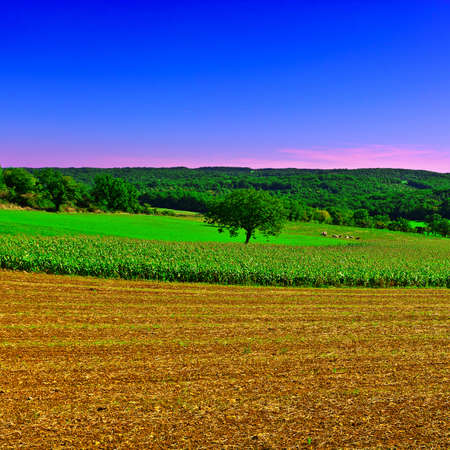 Plantation of Corn in the French Limousen, Sunset photo