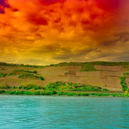Young Vineyard on the hill, Shore the Rhine. photo
