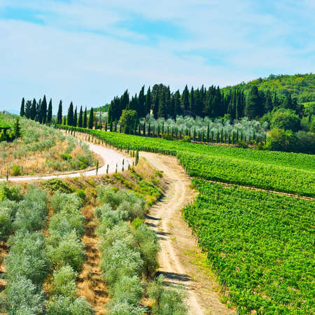 Tuscan Landscape with Vineyards and Olive Groves 版權商用圖片