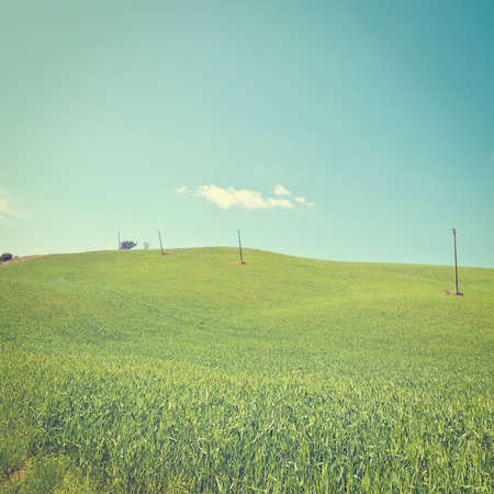 sloping: Green Sloping Meadows of Tuscany.
