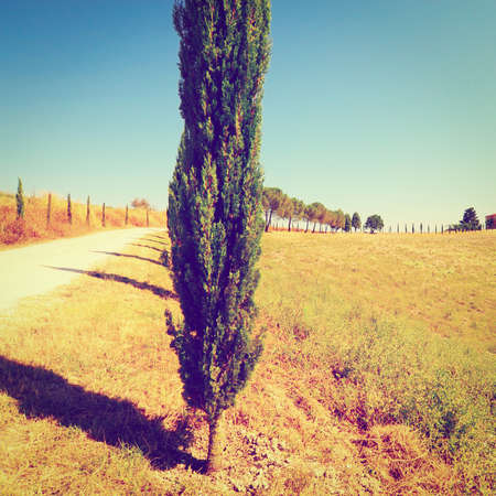 Cypress Alley Leading to the Farmhouse in Tuscany. photo