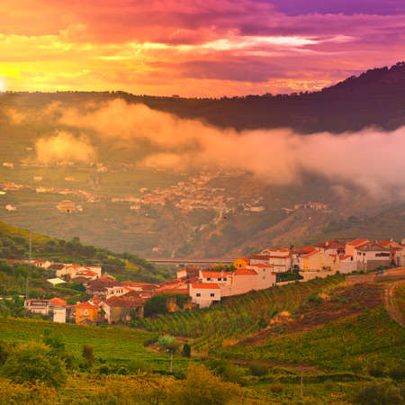 Vineyards on the Hills of Portugal, Sunset. photo