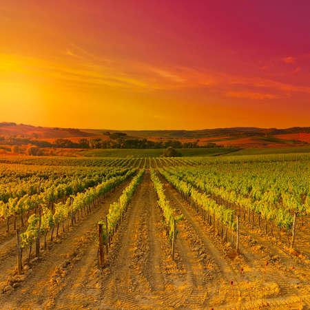 日没、キャンティ地方のブドウ畑で、トスカーナの丘。