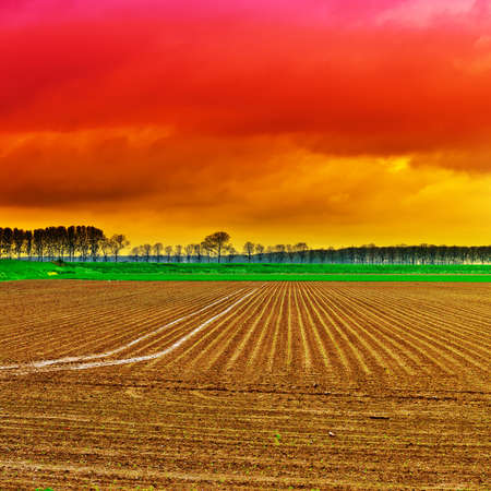 furrow: Poplars on the Protective Dam in the Netherlands. Stock Photo