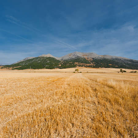 Hay Bales on the Field in the Cantabrian Mountain, Spain photo