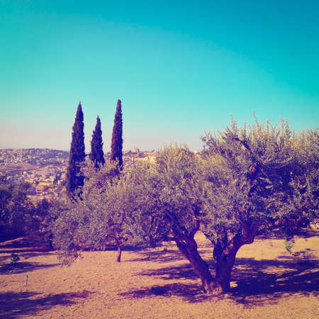 View to Jerusalem from the Olive Grove on the  Mount of Olive photo