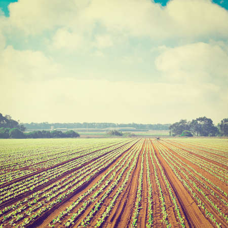 Rows of Fresh Young Green Seedling in Portugal,