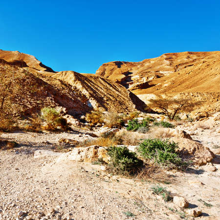 canyon negev: Canyon of the Negev Desert in Israel Stock Photo