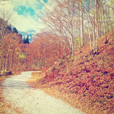 Dirt Forest Road on the Slopes of the  Italian Alps in Piedmont photo