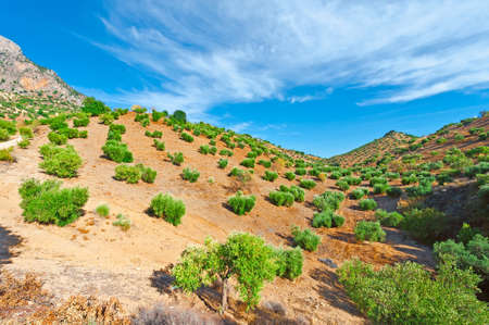 cantabrian: Olive Grove in the Cantabrian Mountains, Spain Stock Photo