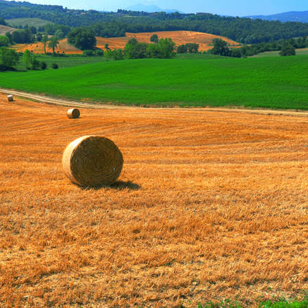 toscana: Toscana Landscape with Many Hay Bales in the Morning Stock Photo