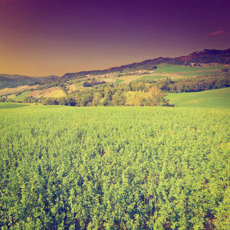 farmhouses: The Italian Farmhouses Surrounded by Green Fields, Sunrise Stock Photo