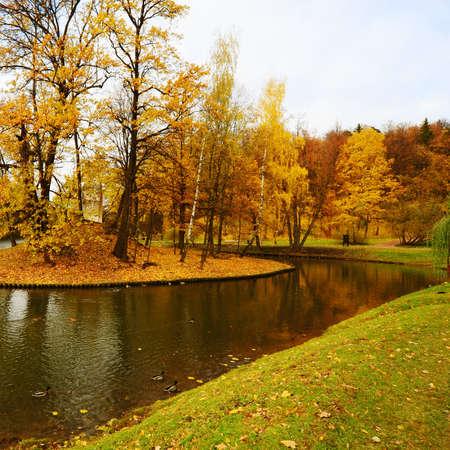 Pond with Wild Ducks in Autumn Park,  Russia photo