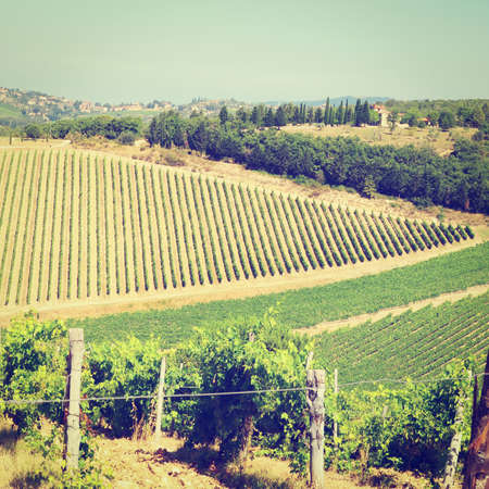 Hill of Tuscany with Vineyard in the Chianti Region, Italy