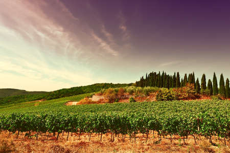 Hill of Tuscany with Vineyard in the Chianti Region at Sunset, Vintage Style Toned Picture